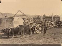 Тифлис. Арба дров на рынке (Ермаков Д.И. 1890)