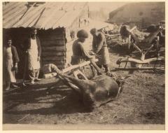 Тифлис. Азиатский способ ковки быка (Ермаков Д.И. 1890)
